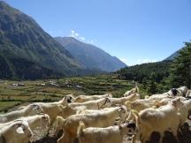 Trekking to Ghasa
